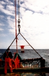 Belgian Marine Science (
