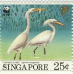 Egretta eulophotes