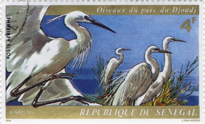 Egretta alba & Egretta garzetta