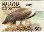 Haliaeetus leucogaster