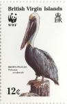 Pelecanus occidentalis