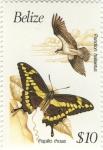Pandion haliaetus