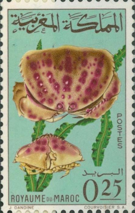 Calappa granulata