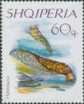 Holothuria sp.