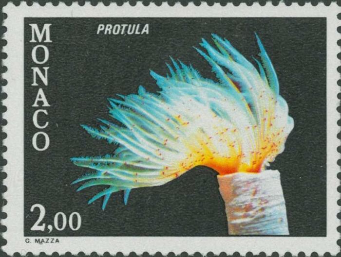 Protula sp.