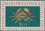 Carpilius maculatus