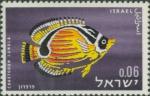 Chaetodon lunula