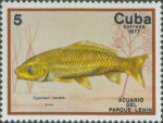 Cyprinus carpio