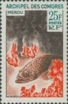 Epinephelus sp.