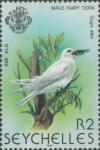 Gygis alba