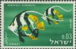 Heniochus acuminatus