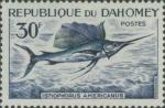 Istiophorus americanus