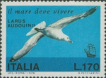 Larus audouinii