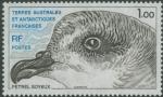 Pterodroma mollis