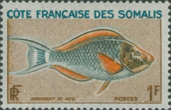 Scaridae sp.