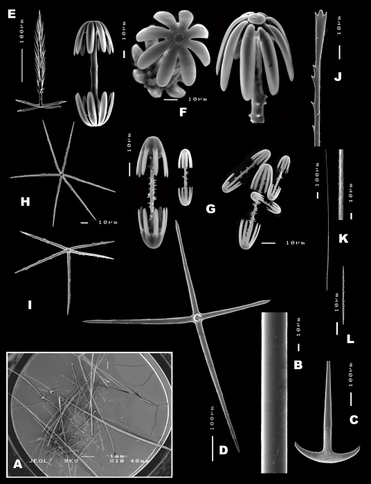 Spicules of Poliopogon amadou