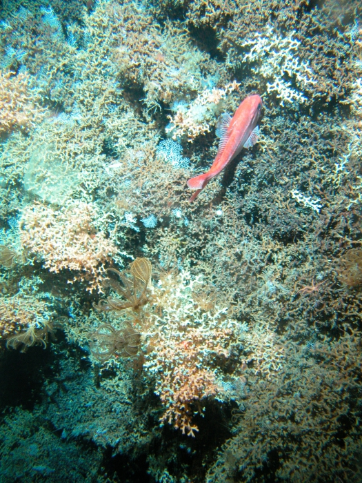 New Zealand Pyre Seamount, Graveyard seamount complex