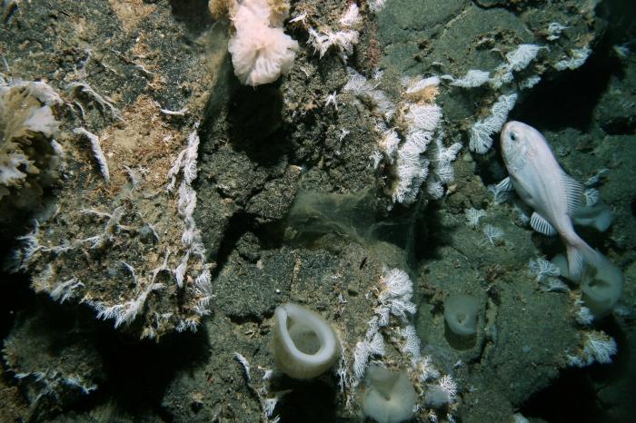 Graveyard Seamount, New Zealand