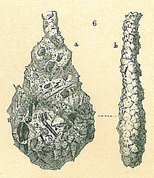 Lagenammina ampullacea