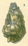 Lagenammina arenulata
