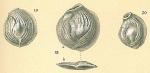 Nodobaculariella convexiuscula
