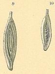 Spirosigmoilina pusilla