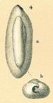 Triloculinella obliquinodus