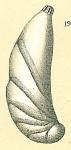 Astacolus sp.nov.