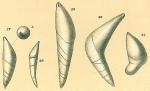 Dentalina ariena