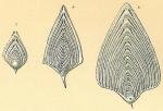 Frondicularia sagittula