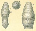 Glandulonodosaria annulata