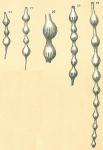 Grigelis semirugosa