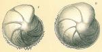 Lenticulina denticulifera