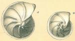 Lenticulina submamilligera