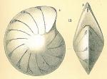 Lenticulina thalmanni