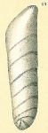 Vaginulinopsis sublegumen