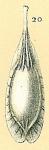 Fissurina foliformis