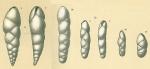Fursenkoina texturata