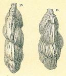 Trifarina angulosa
