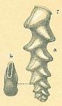 Pseudobrizalina strigosa