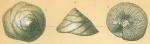 Glabratella patelliformis