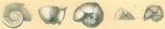 Globorotalia truncatulinoides