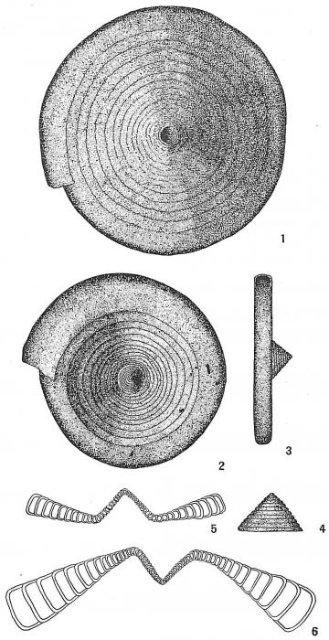 Ammodiscoides turbinatus
