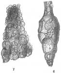 Proteonina helenae