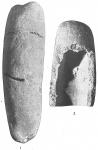 Storthosphaera elongata