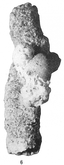Tholosina bulla