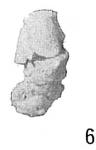 Ammobaculites reophaciformis