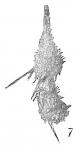 Reophax hispidulus