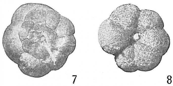 Trochammina subturbinata