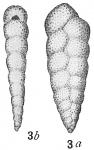 Bolivina variabilis, author: Cedhagen, Tomas